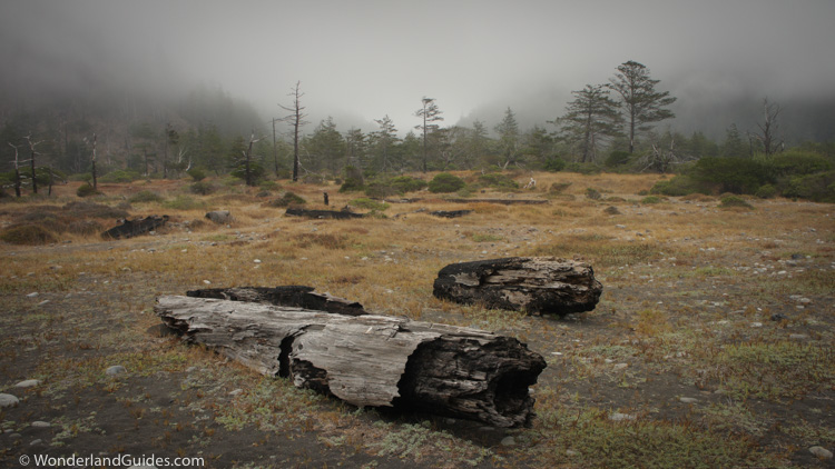 Coastal prairie meets the mixed evergreen forests of the fog belt in the King Range.