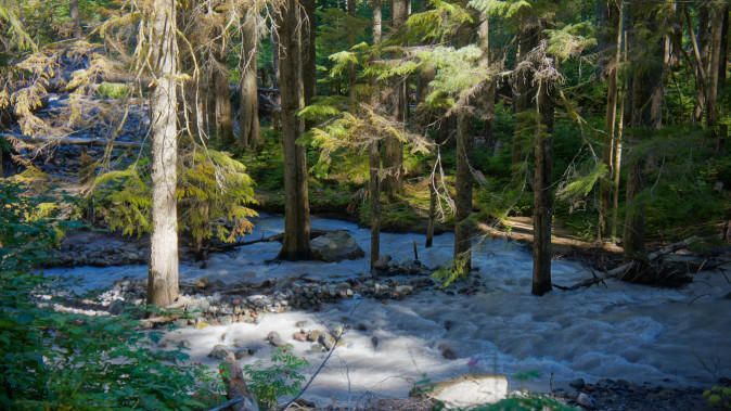 The Carbon River from the Wonderland Trail near Ipsut Creek Campground