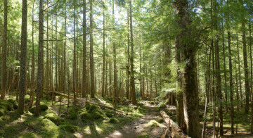 The Carbon River valley - Wonderland Trail Book