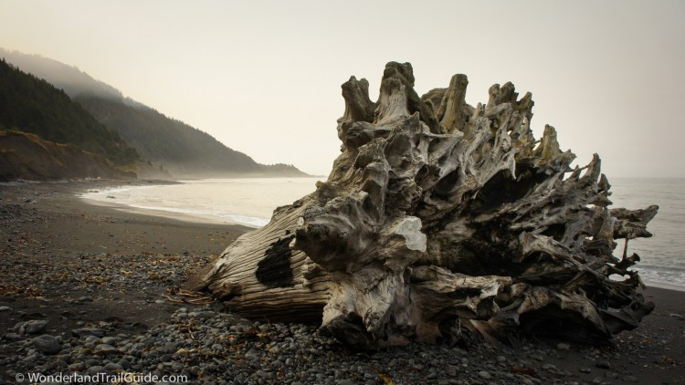 Old growth driftwood on the Lost Coast Trail